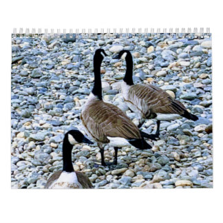 Beauty in Creation Calendar