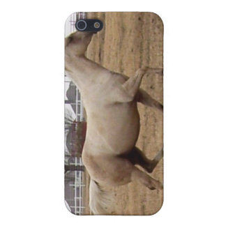 Beauty in Motion iPhone case iPhone 5 Cover