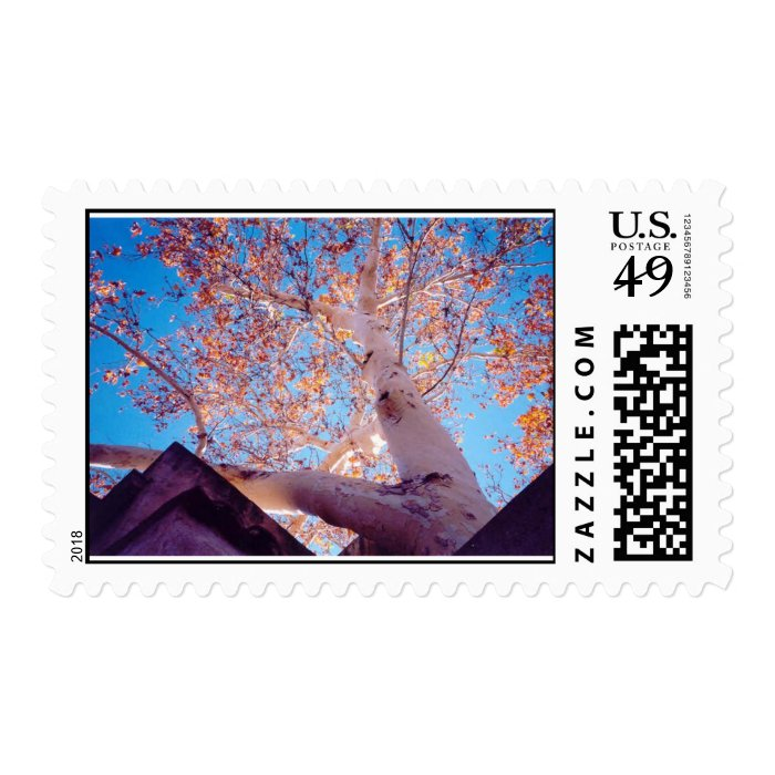 Beauty in Nature Postage