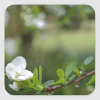 Beauty in Simple Things Square Sticker