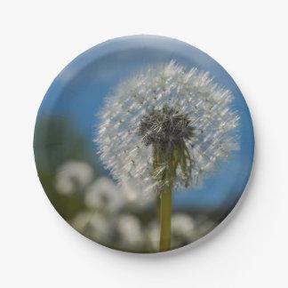 Beauty Of A Dandelion Paper Plate