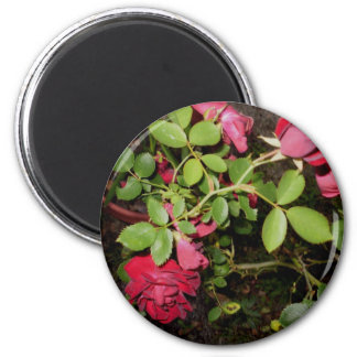 Beauty of a Rose Keepsake Collection Magnet