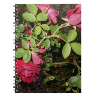 Beauty of a Rose Keepsake Collection Notebook