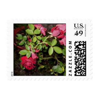 """""""Beauty of a Rose Keepsake Collection"""" Postage"""
