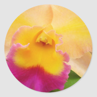 Beauty Of An Orchid Classic Round Sticker
