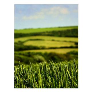 Beauty of life postcard