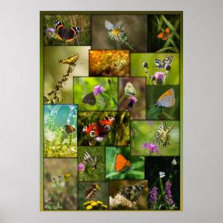 Beauty of the butterflies poster