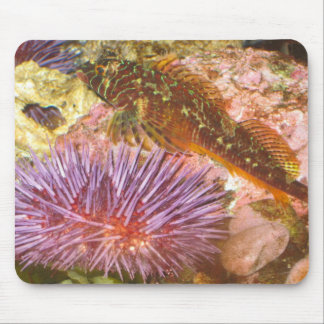 Beauty of the Sea Mouse Pad