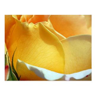 Beauty of Yellow Postcard