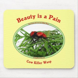 cow killer wasp red velvet ant