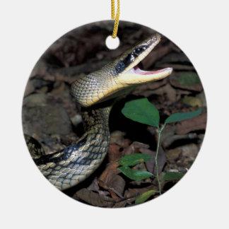 Beauty rat snake ceramic ornament