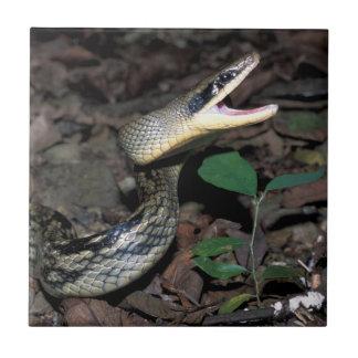 Beauty rat snake ceramic tile