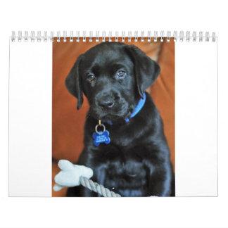 beauty-the-labrador-retriever_42196_2010-02-24_w45 wall calendars