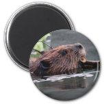 beaver 2 inch round magnet