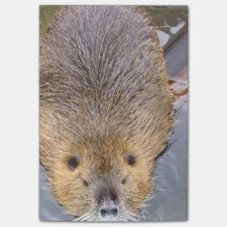 beaver-2 post-it® notes