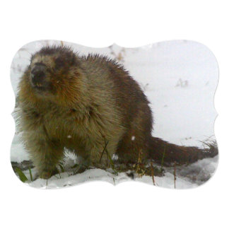 beaver-6 announcements