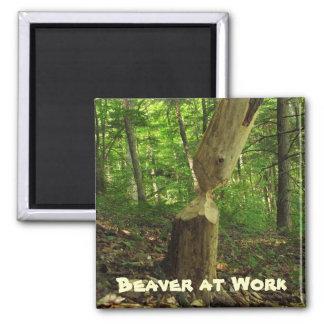 Beaver at Work Magnet