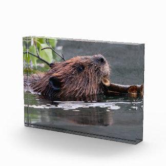 beaver award