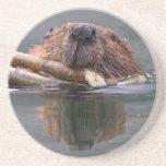 beaver beverage coaster