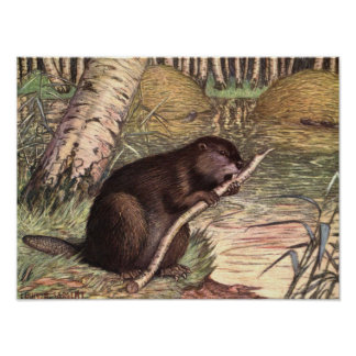 Beaver by Louis Sargent, Vintage Wild Animals Poster