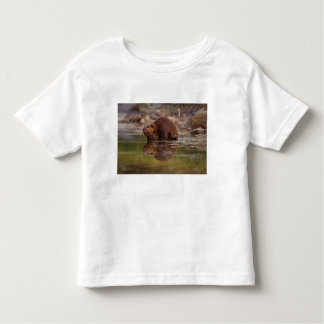 beaver, Castor canadensis, goes for a swim in Tshirt