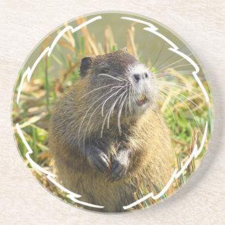 Beaver Coaster