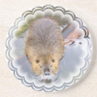 Beaver Coasters
