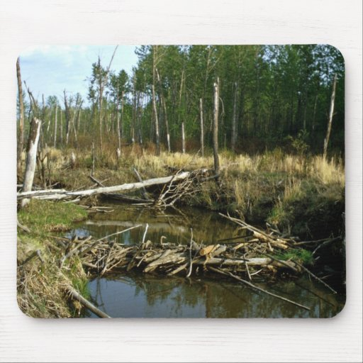Beaver Dam Mouse Pad