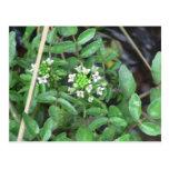 Beaver Dam Slough Flora Flowers Plants Botany Postcard