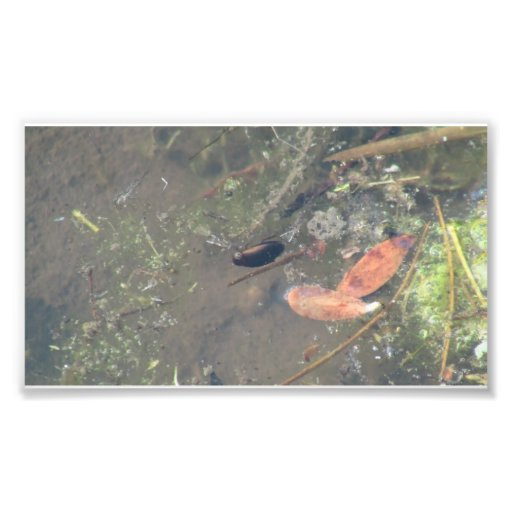 Beaver Dam Slough ID Aquatic Plants Animal Water Photo Print