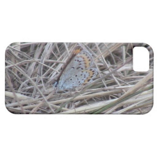 Beaver Dam Slough ID Insects Arachnids Bugs Fauna iPhone 5 Cover
