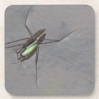 Beaver Dam Slough ID Insects Arachnids Bugs Fauna Coaster