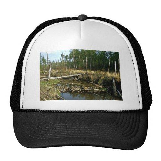 Beaver Dam Trucker Hat