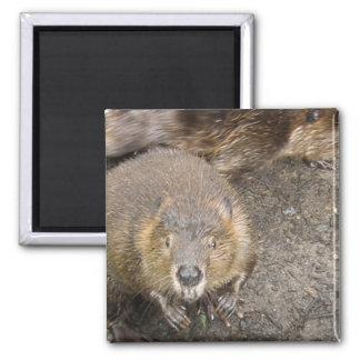 Beaver Design Magnet Fridge Magnets