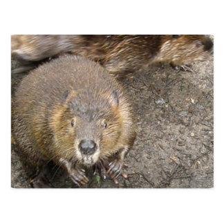 Beaver Design Postcard