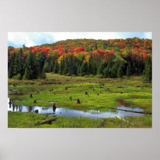Beaver el prado y el bosque de madera dura, póster