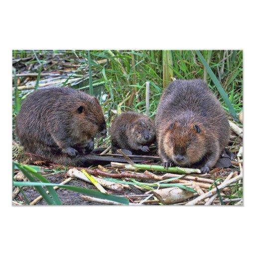 Beaver Family Photo Print