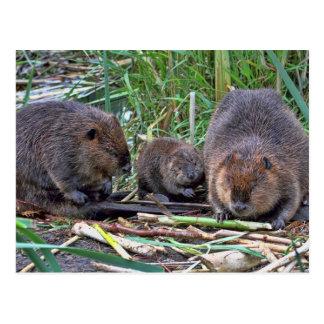 Beaver Family Postcard