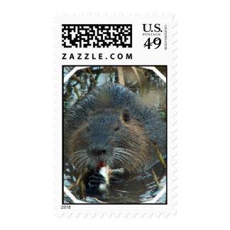 Beaver Habitat Postage Stamp