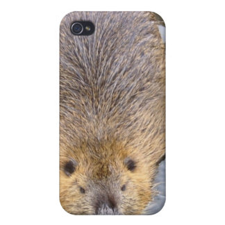 Beaver iPhone Case iPhone 4 Cover