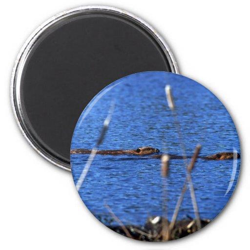 Beaver Magnet Magnets