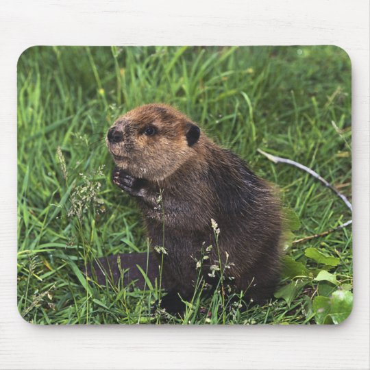 Beaver Mouse Pad