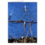 Beaver Note Cards Greeting Card