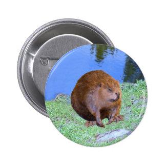 Beaver (Oregon New York) 2 Z .jpg Pinback Button