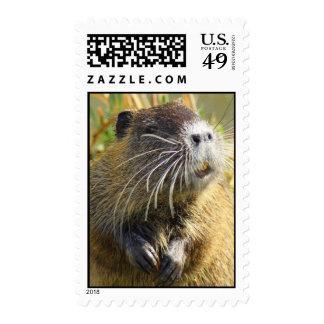 Beaver Photo Postage Stamp