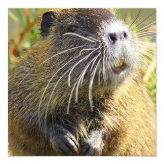 Beaver Photo Poster Personalized Announcement