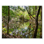 Beaver pond posters