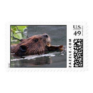 Beaver Postage Stamps