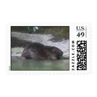 Beaver Postage Stamp Postage