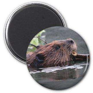 beaver refrigerator magnets